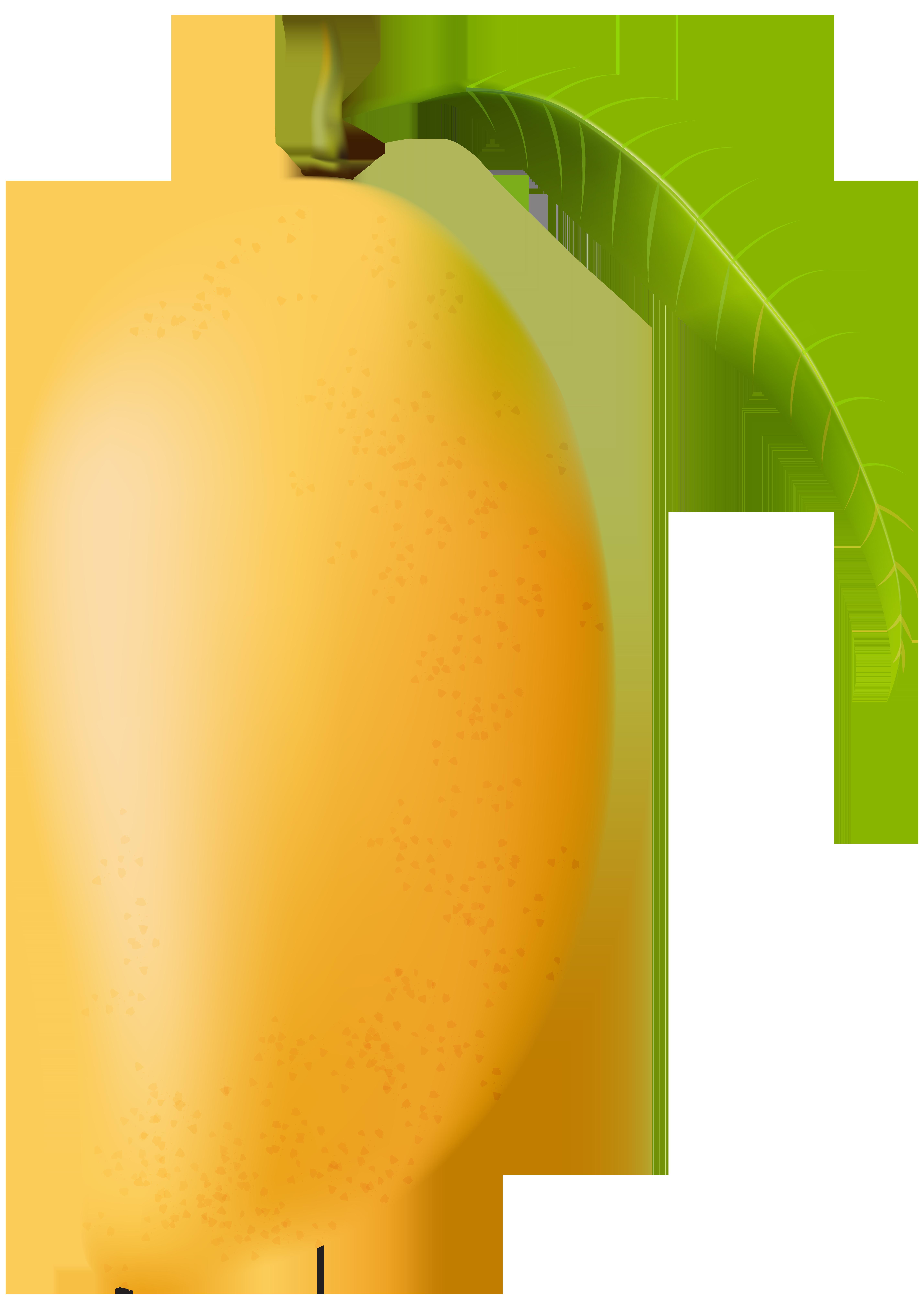 vector royalty free download Mango PNG Clip Art Image