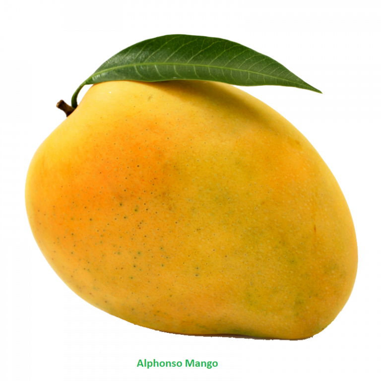 clipart black and white stock Mango Clipart Png download mango free png photo images and clipart