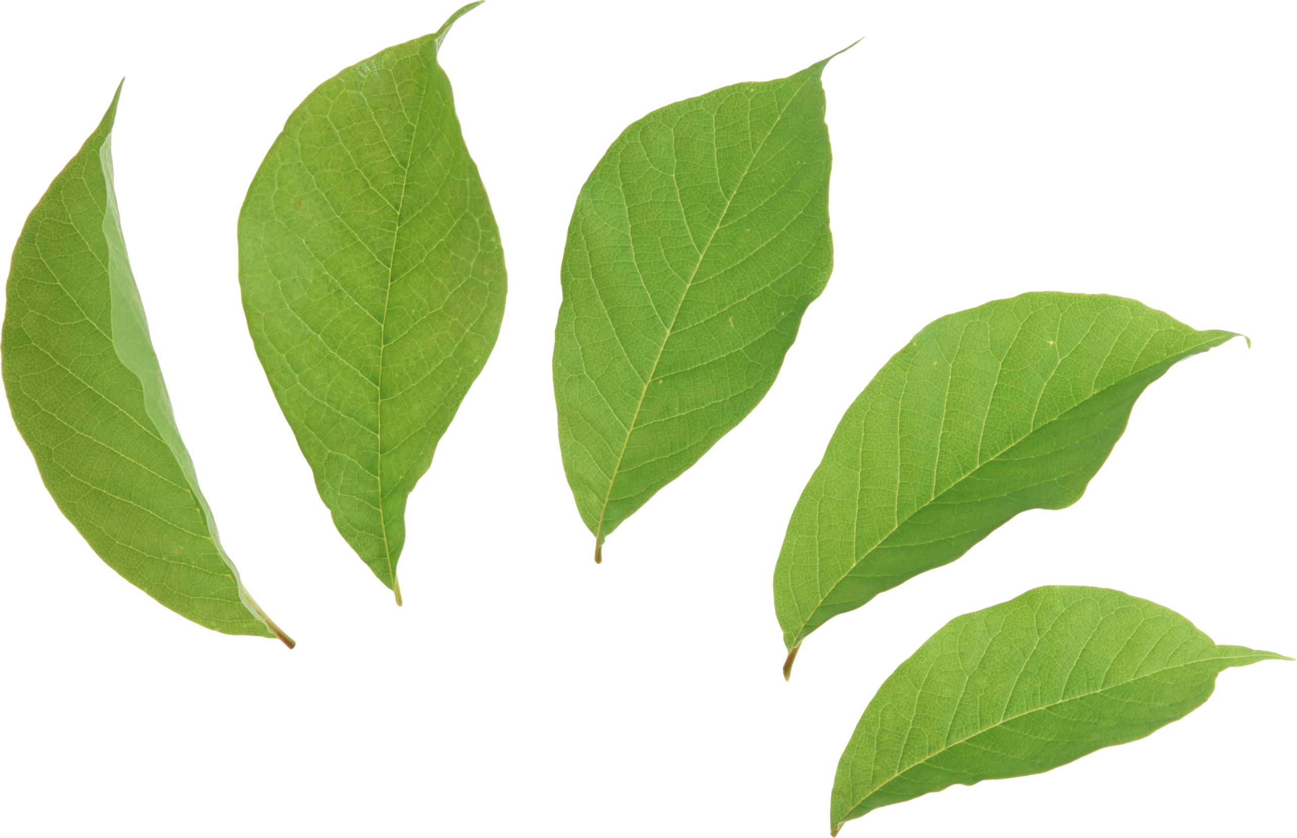 banner transparent download Green leaves PNG images free download pictures