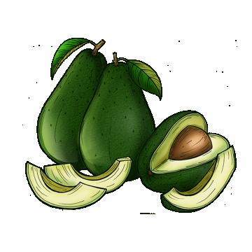 vector transparent library Avocado Png