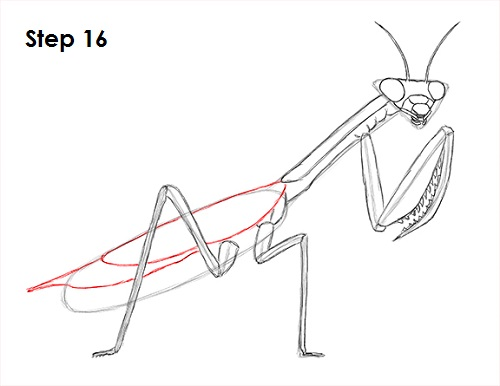 picture freeuse How to Draw a Praying Mantis