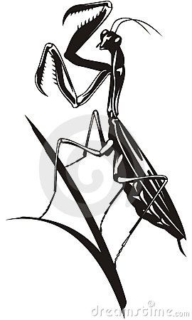 graphic black and white stock Praying images google search. Mantis drawing design