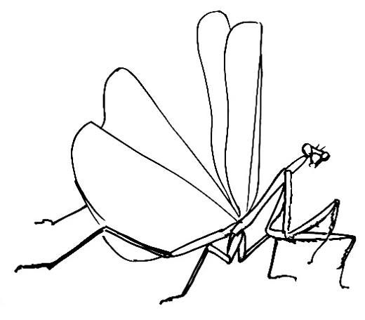 png free download Mantis drawing design. How to draw a