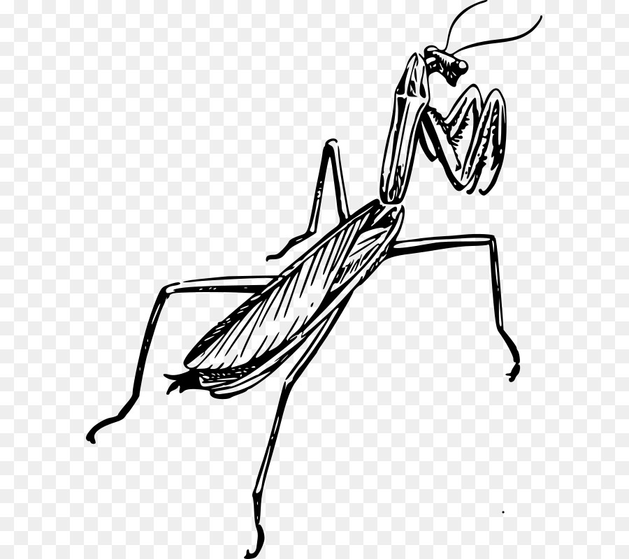 image black and white Pattern background clipart wing. Mantis drawing design