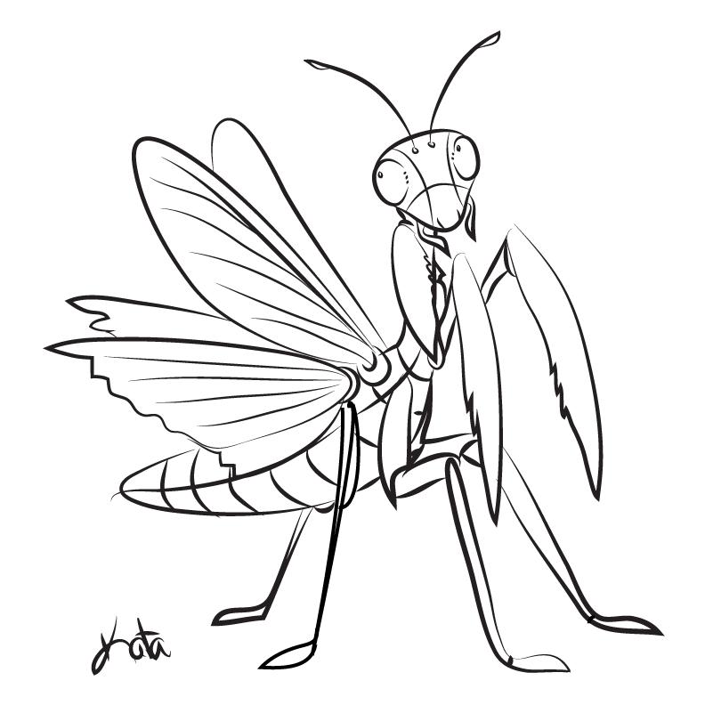 png royalty free Mantis drawing design. Praying tattoos and drawings