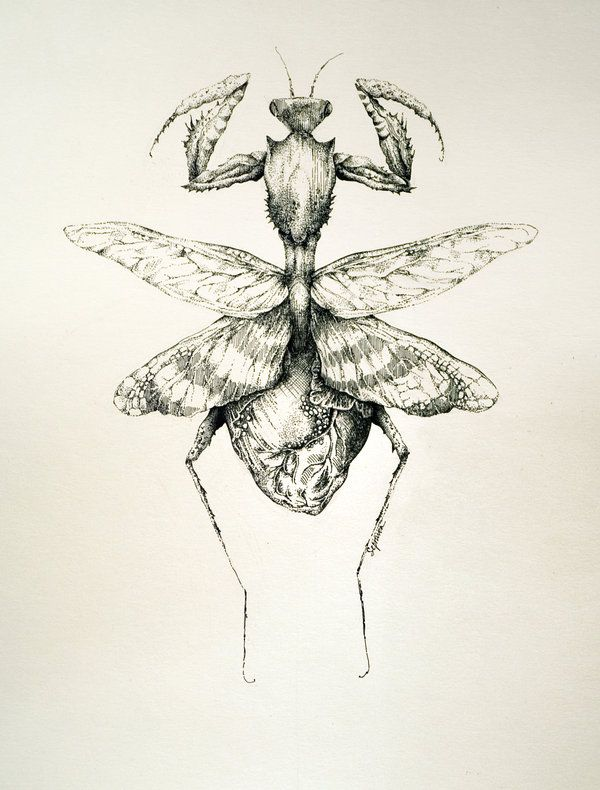 picture free library By sepraven deviantart com. Mantis drawing flower