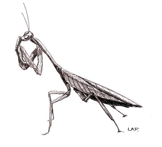 svg freeuse library Praying Mantis drawing