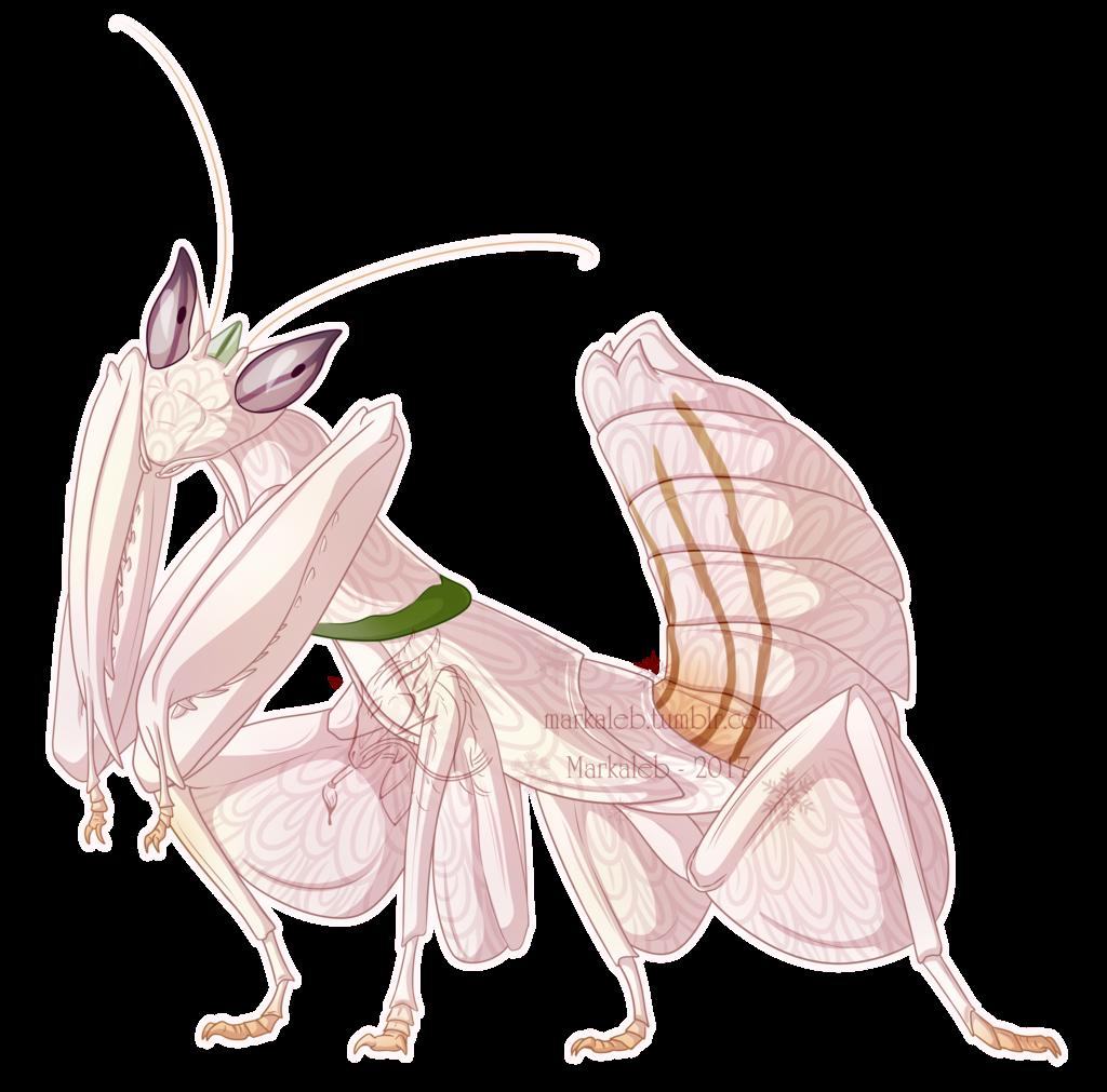 vector transparent Orchid Mantis