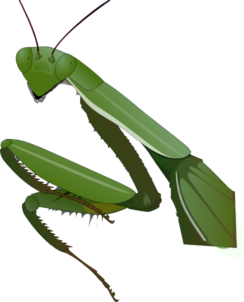 vector royalty free stock Praying Mantis Clip Art at Clker