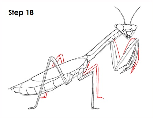 clip freeuse download How to Draw a Praying Mantis