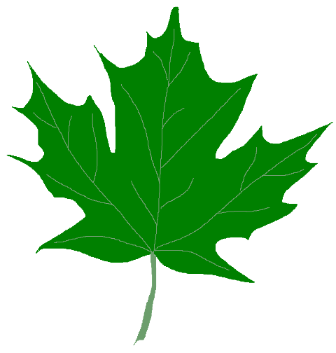 banner free library Maple clipart. Green leaves .