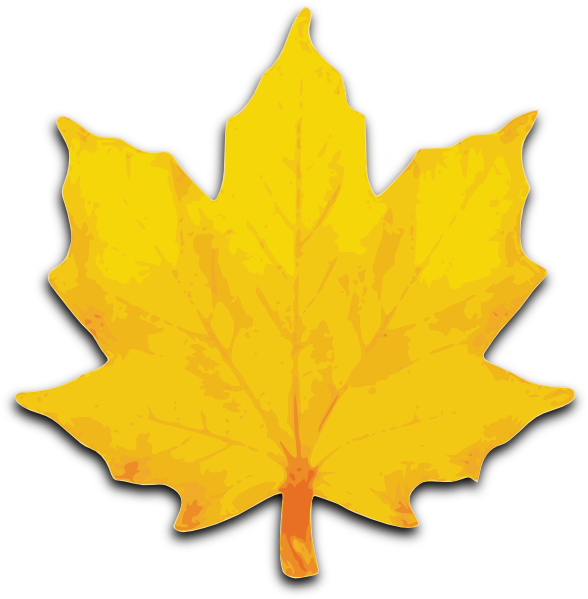 picture library Leaf big free on. Maple clipart.