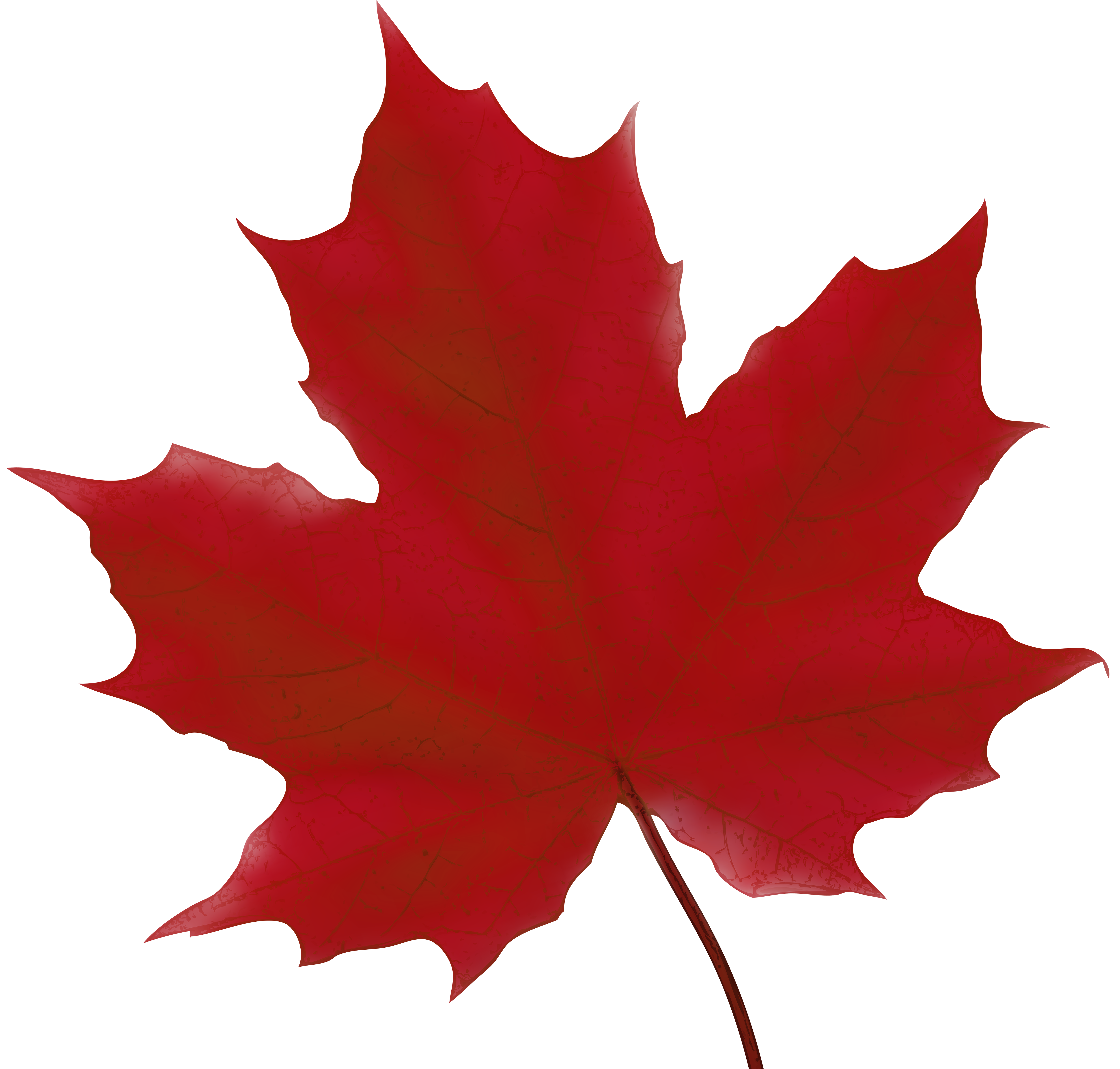 picture library library Leaf red png clip. Maple clipart.