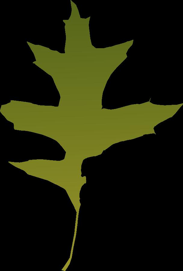png stock Maple clipart acorn leaf. Oak f zet pinterest