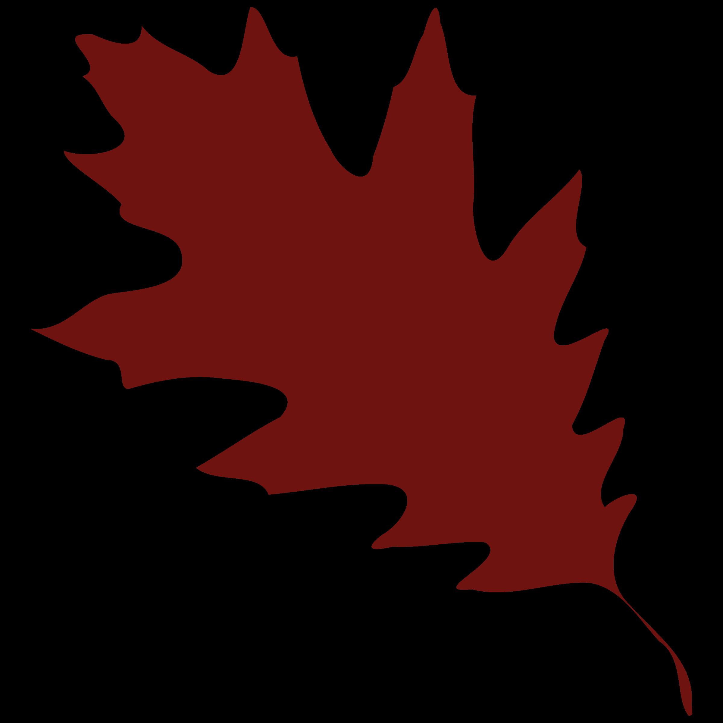 royalty free stock Maple clipart acorn leaf. Oak leaves clip art