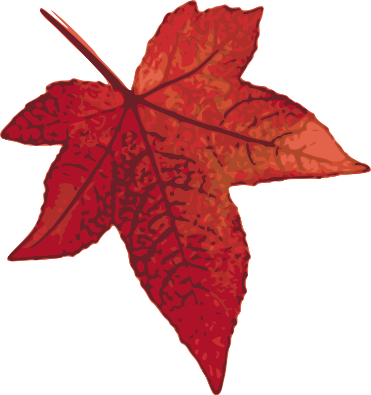 clip art library Free vector red graphic. Maple clipart leaf pattern.