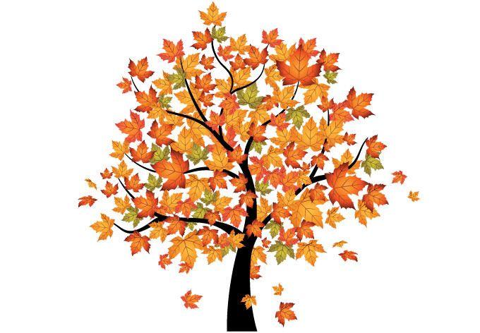 graphic transparent stock Maple clipart tree autumn. Considering kindergarten art trees.