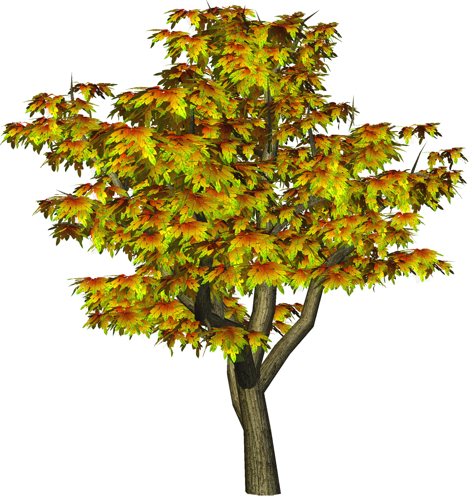 picture transparent stock Maple clipart tree autumn. Png gallery yopriceville high.