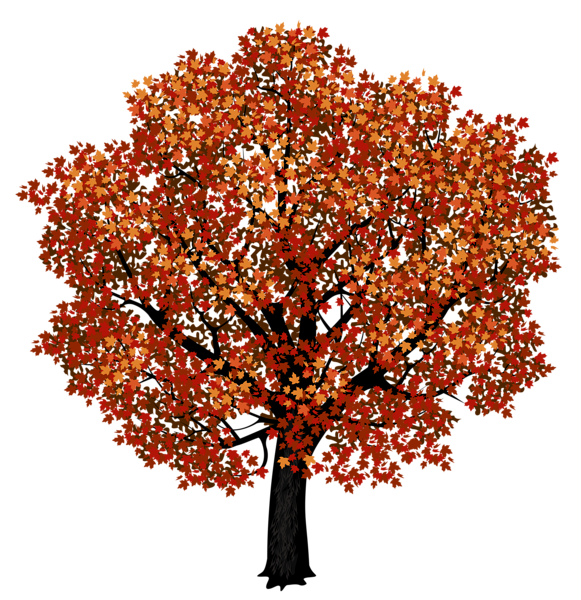clipart library stock Maple clipart tree autumn. Red png picture graphics.