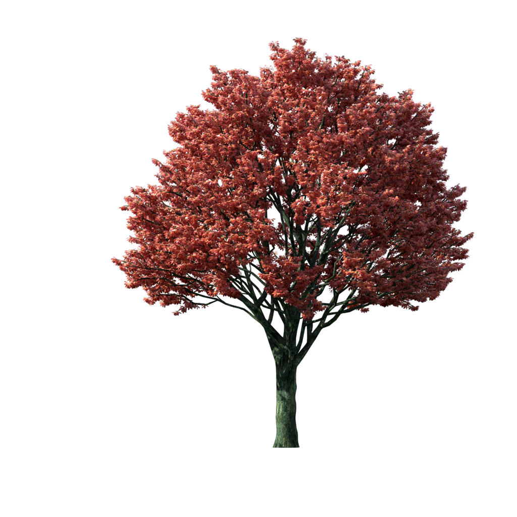 picture Flaming png photoshop treeclipartflamingautumnmapletreepng. Maple clipart tree autumn.