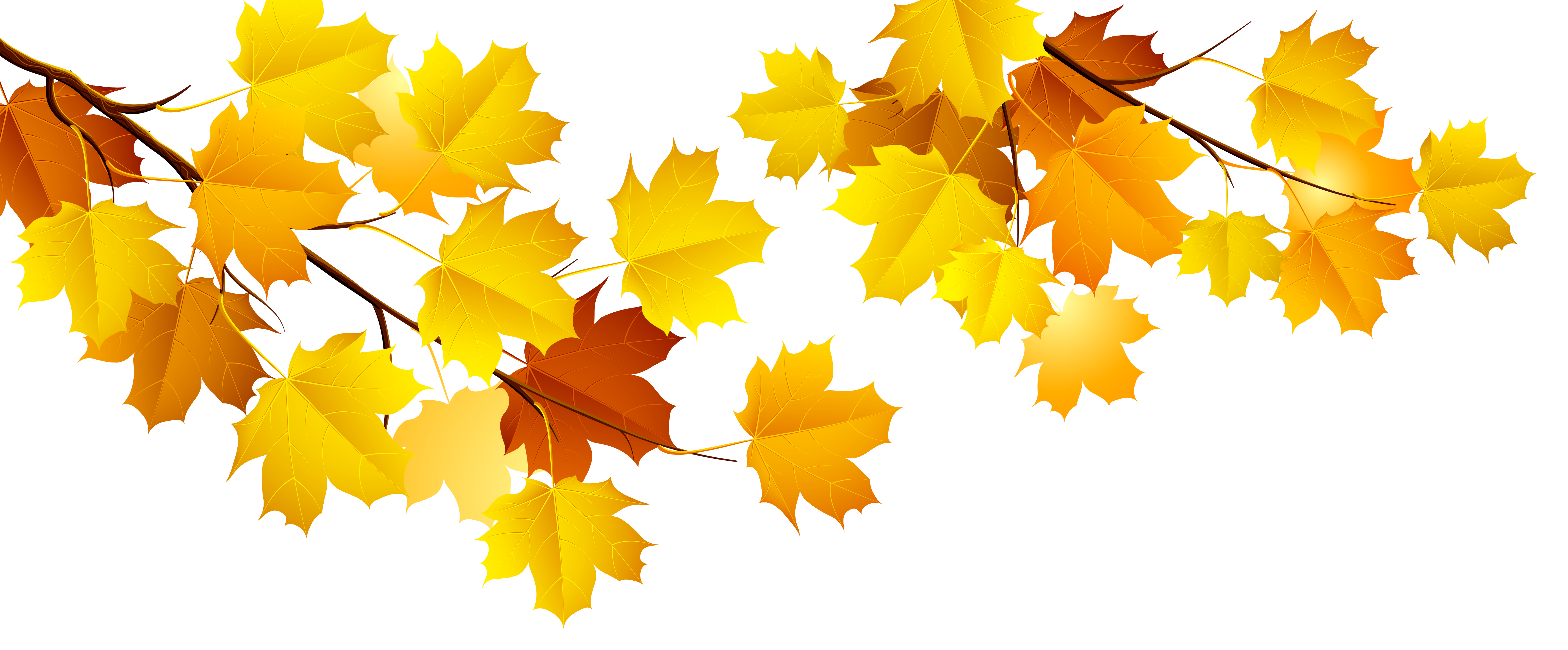 picture transparent Branch png gallery yopriceville. Maple clipart tree autumn.