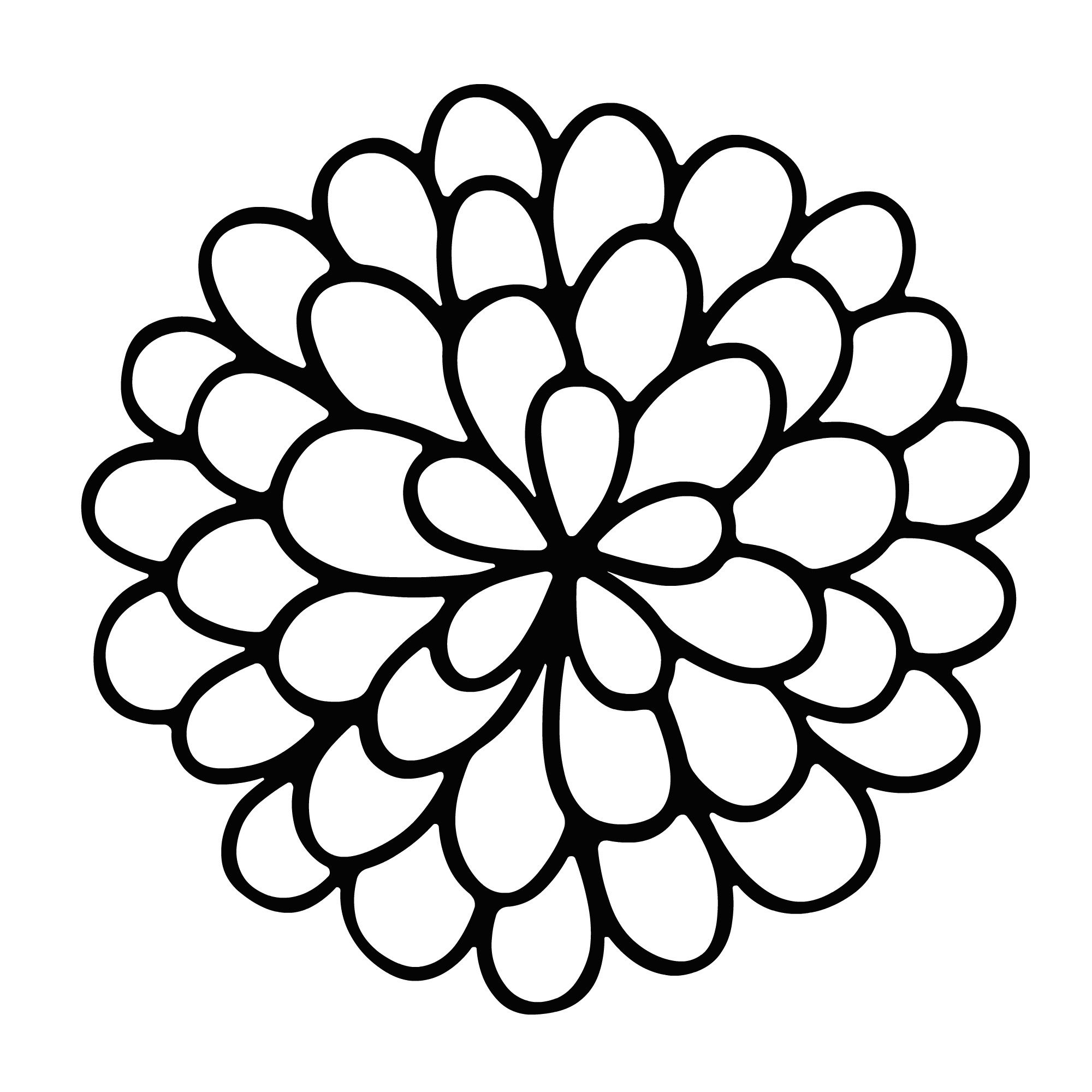 freeuse download Marigolds drawing. Marigold flower easy sketch.