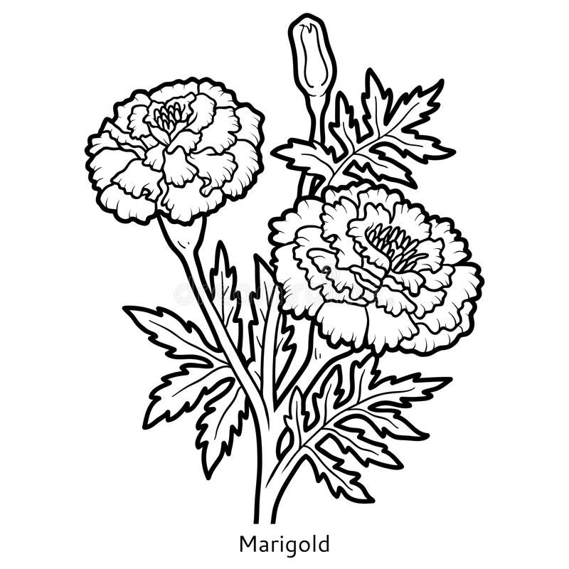 jpg free download Marigolds drawing. Image result for flowers.