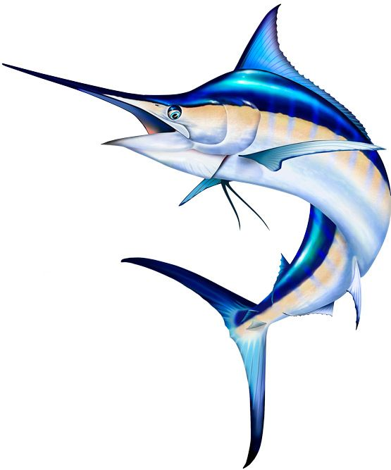 clip art library download Pictures i want to. Marlin clipart.