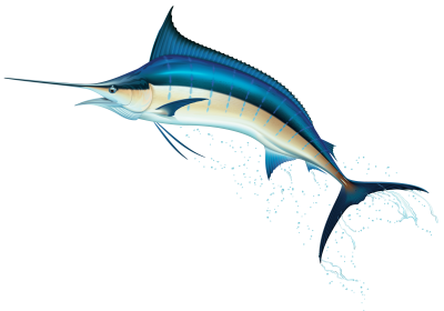 clip library library Marlin clipart xiphias. Transparent png free download.