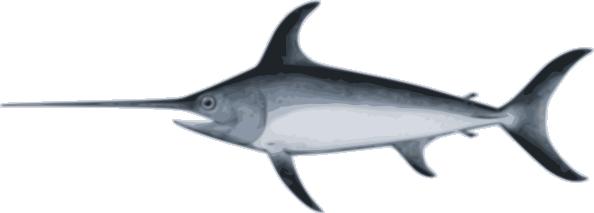 image transparent library Marlin clipart xiphias. Sword fish clip art.