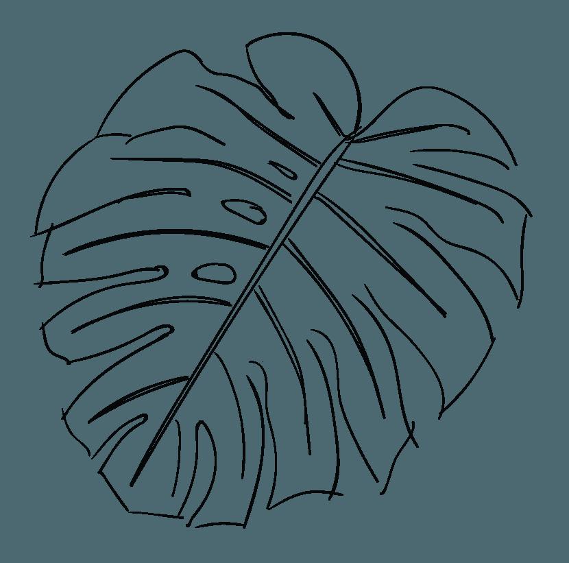 vector transparent download Line of a leaf. Maui drawing