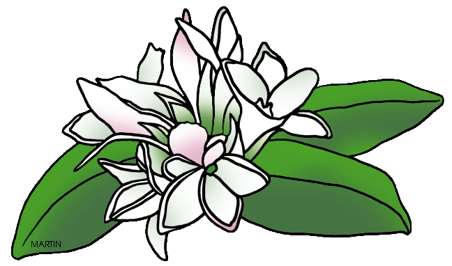 svg transparent stock mayflower drawing may flower #99500402