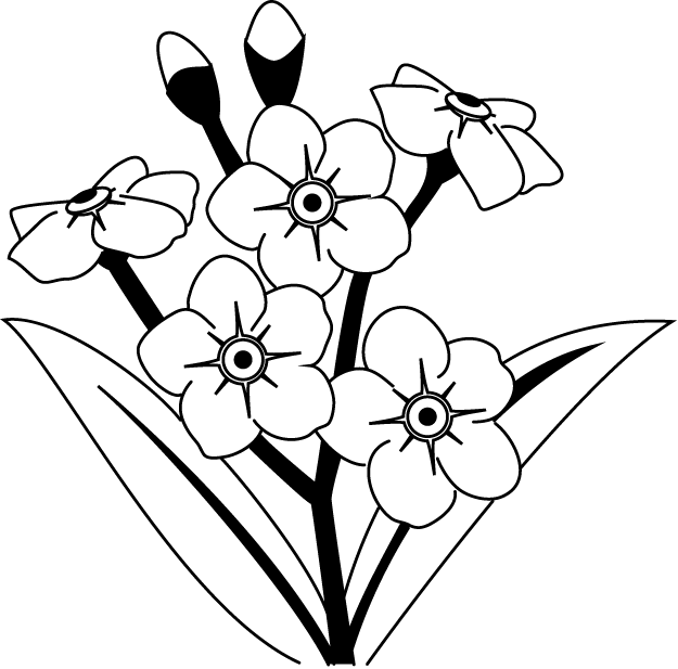 clip freeuse clipart forget me not flowers black and white