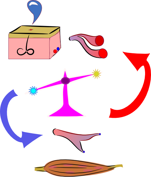 picture library library Medical clipart exercise science. Physiology clip art at.