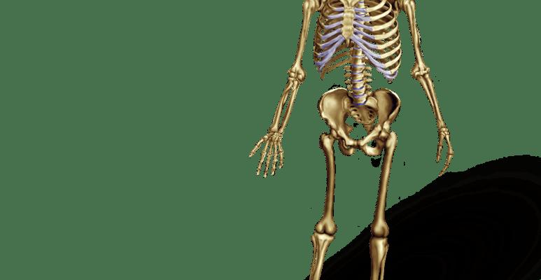 png black and white download Bones vector skeleton bone. Anatomy illustration archives medical
