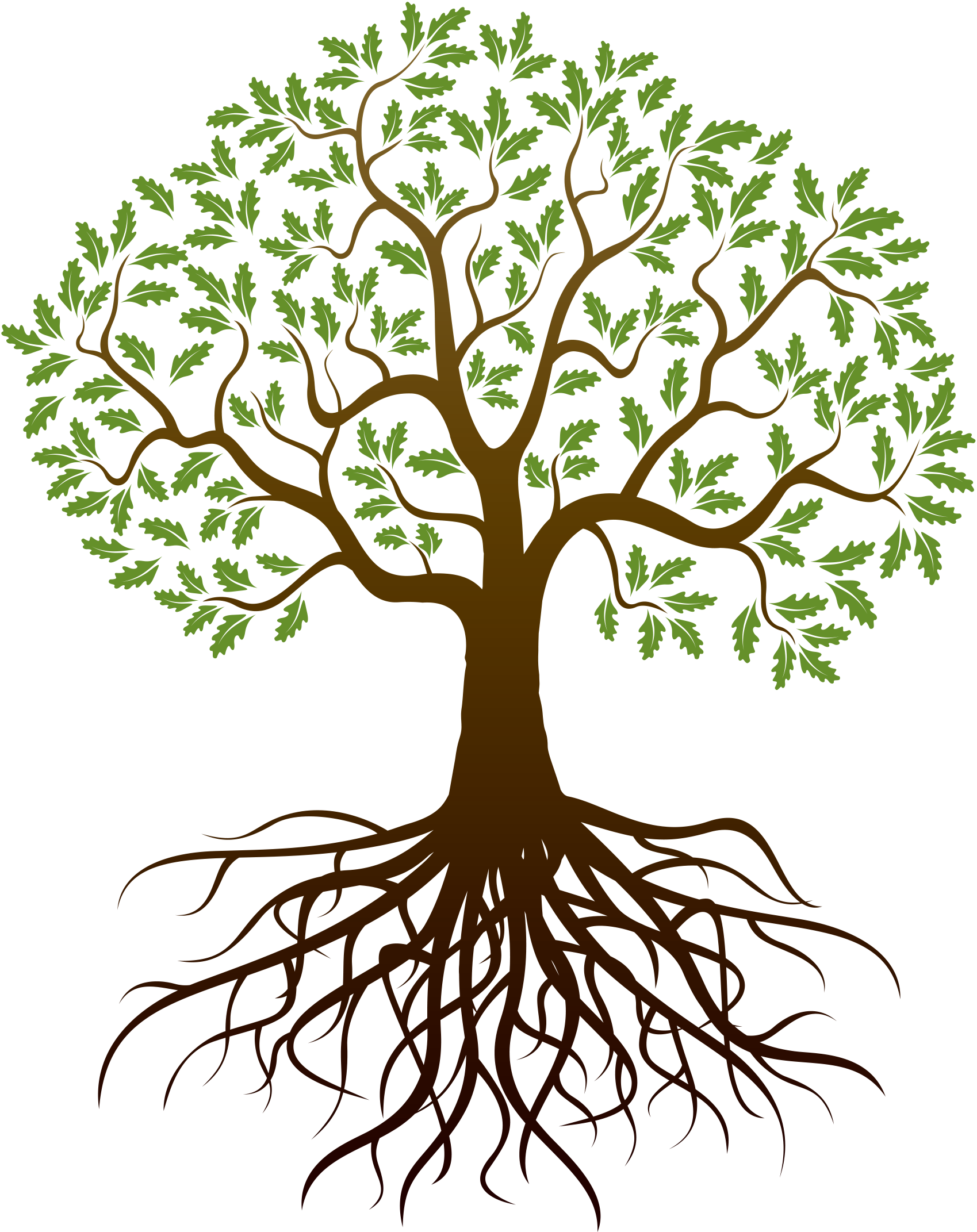 svg freeuse library Drawing Tree Root