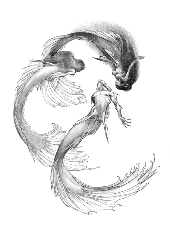 banner free stock Mermaid Drawing Siren Sketch