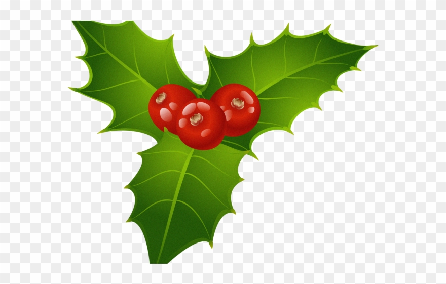 clip art royalty free download Berries clipart leaf christmas. Holly transparent