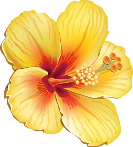 graphic royalty free library  pinterest flowers and. Moana clipart island flower.