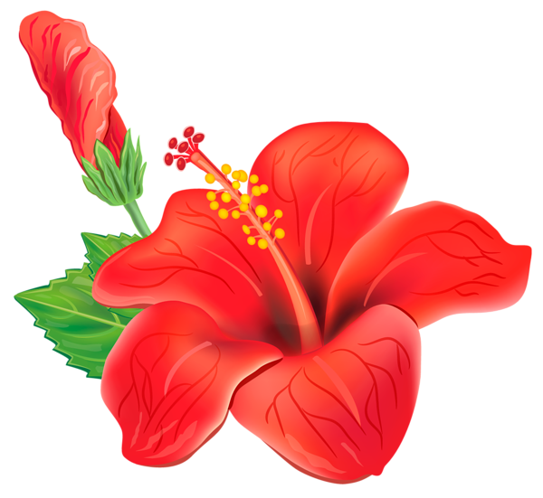 banner freeuse download Moana clipart island flower. Red exotic png picture.