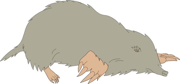 png freeuse stock Gray clip art at. Mole animal clipart