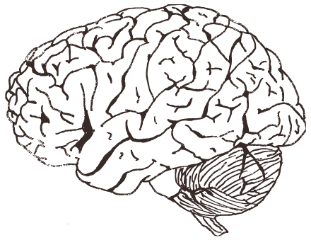 svg black and white Cognitive Neuroscience Materials for Teachers and Students