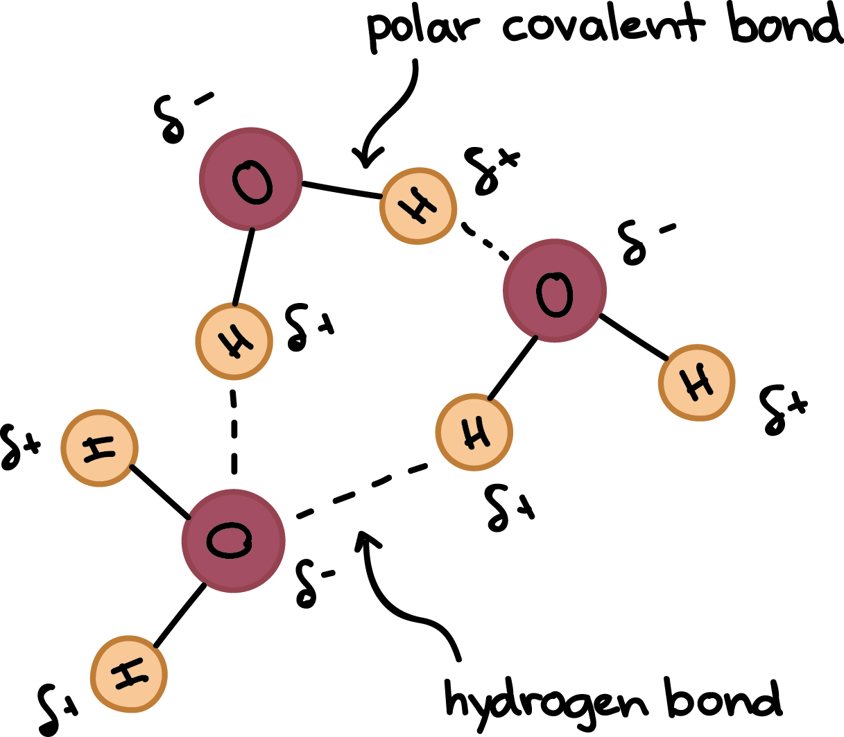 png library download Hydrogen bonds in water