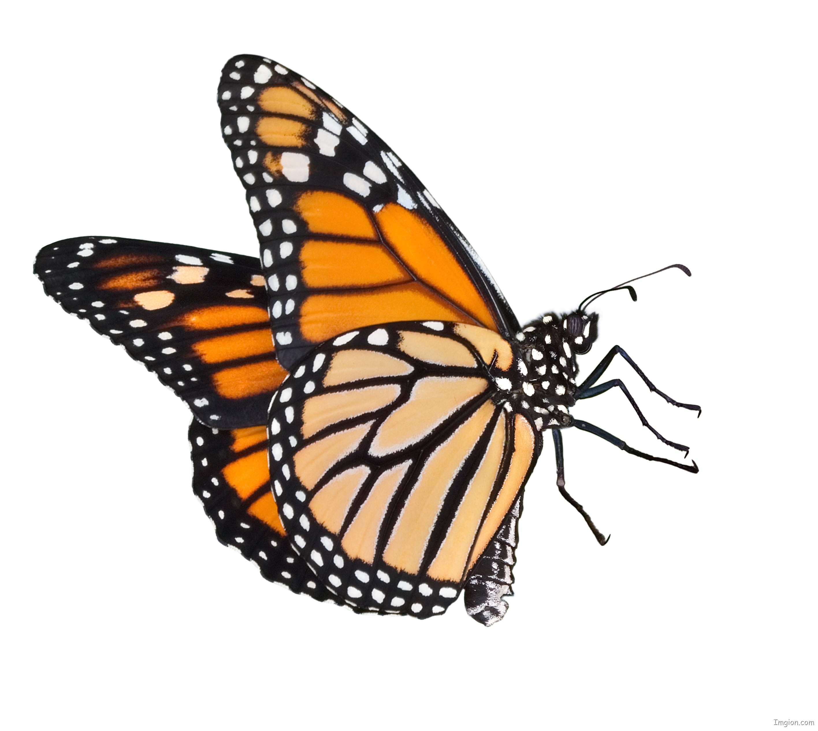 vector free download Free cartoon butterfly download. Monarch clipart.