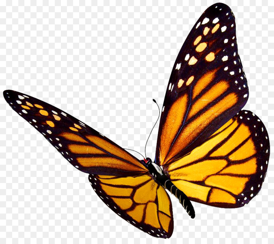 clip transparent Butterfly wing transparent . Monarch clipart