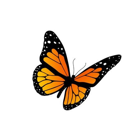 jpg black and white Monarch clipart. Butterfly x making the.
