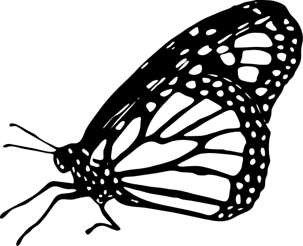 graphic royalty free stock Monarch clipart bengali. Caterpillar drawing at getdrawings.
