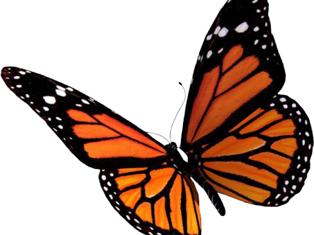 image transparent Butterfly free on dumielauxepices. Monarch clipart butter fly.