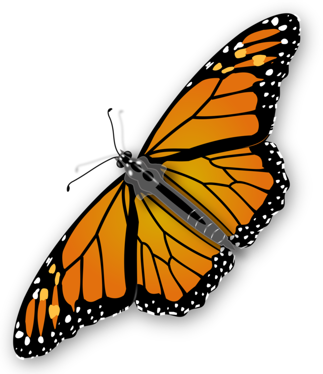 image library stock Butterfly insect computer icons. Monarch clipart butter fly.