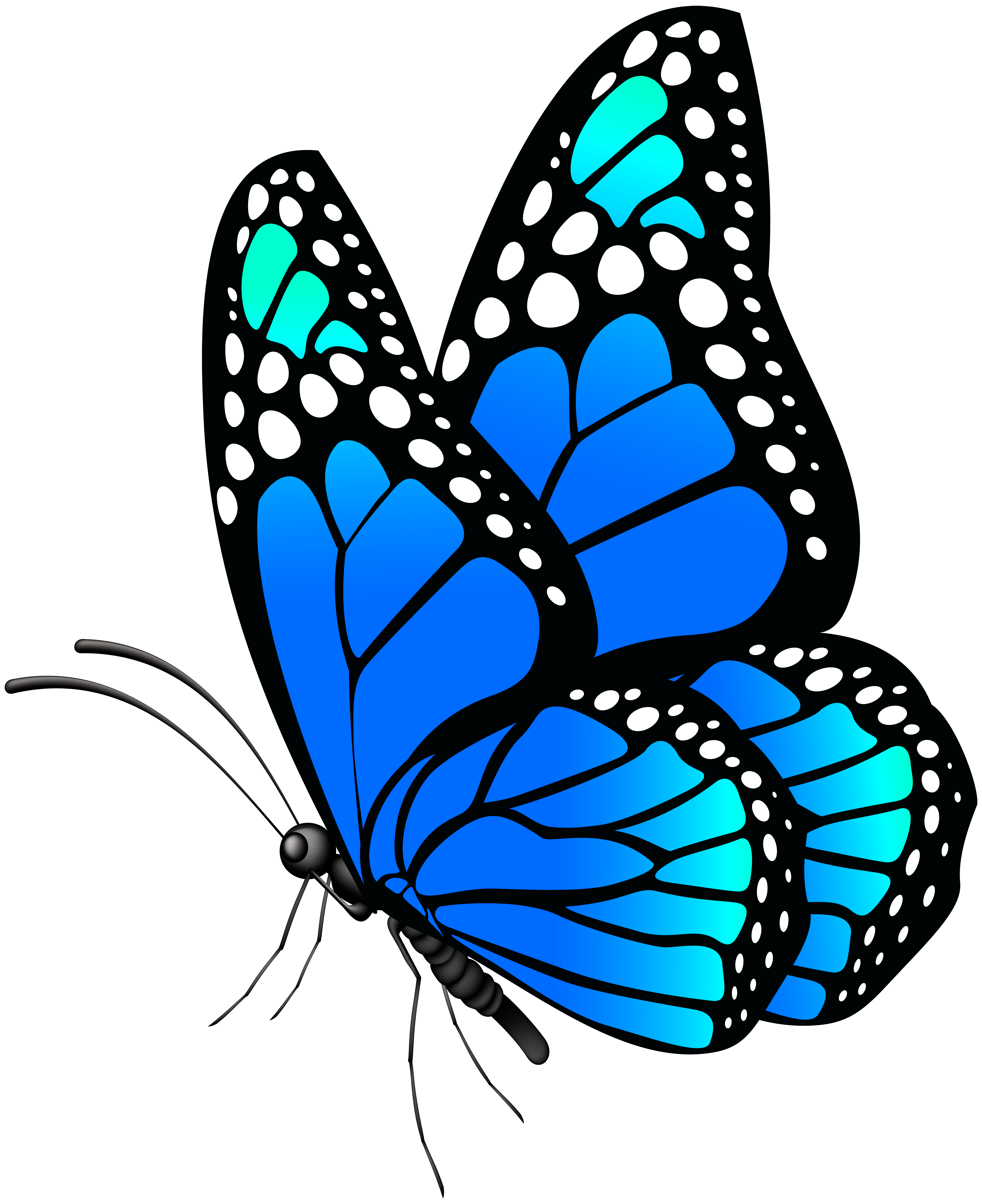 image Moth clipart realistic. Monarch butterfly at getdrawings.